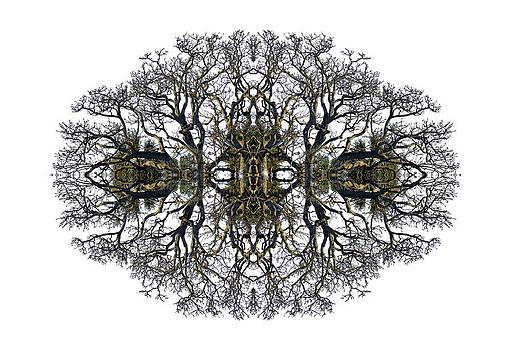 Debra and Dave Vanderlaan - Bare Tree