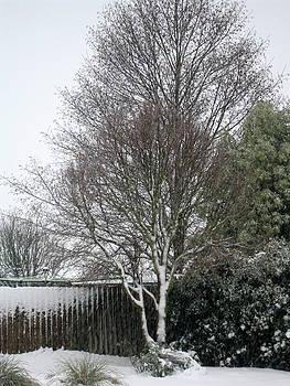 Rachael Shaw - Bare Tree
