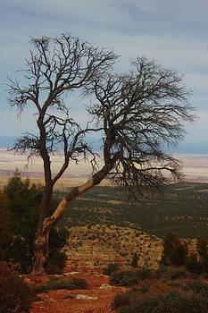 Bare Tree by Valerie Loop