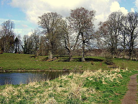 Bare Trees by the River Clyde Scotland by Bill Lighterness