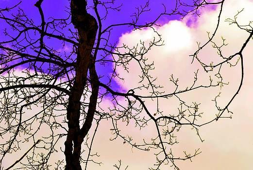 Bare Winter Branches by Michael Sokalski