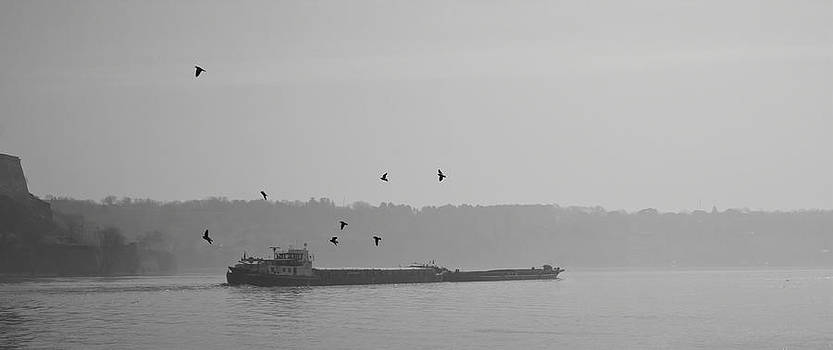 Barges Sail Birds Fly by Zeljko Dozet