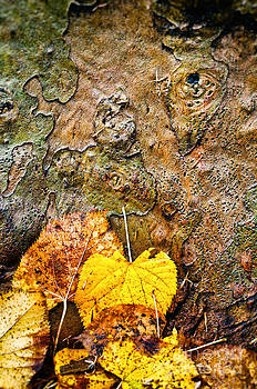 Silvia Ganora - Bark and leaves