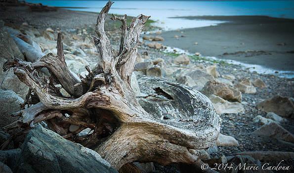 Bark and Stone by Marie  Cardona