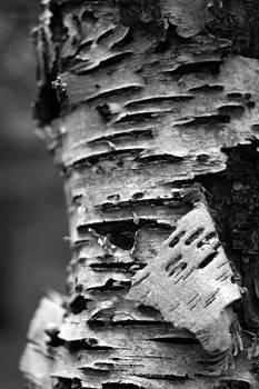 Bark by Brady D Hebert