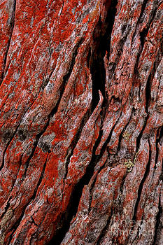 Bark by David Benson