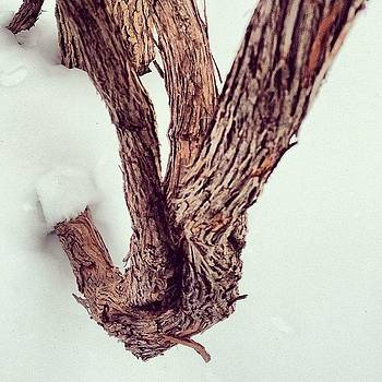 #bark by Elaine Ismert