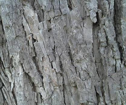 Bark I by Iamthebetty Tbone