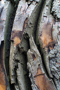 Bark by Kelly E Schultz