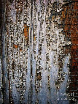Dee Flouton - Bark Texture