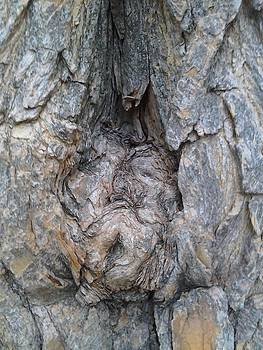 Bark VI Man by Iamthebetty Tbone
