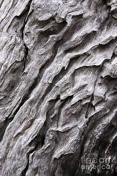 Bark2 by David Benson