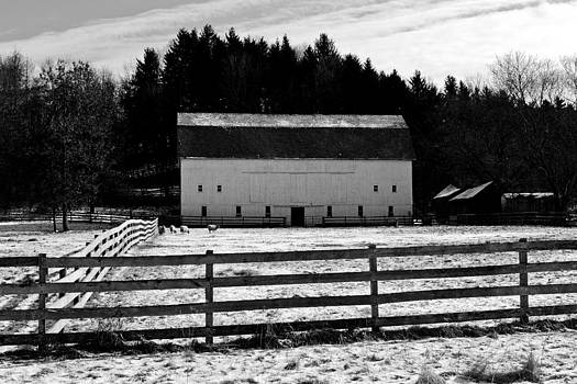 Barn and Sheep by Jeff Picoult