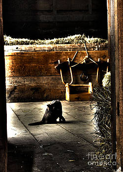Barn Cat by Pamela Walters