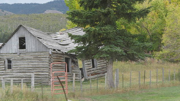 Barn by Diane Mitchell