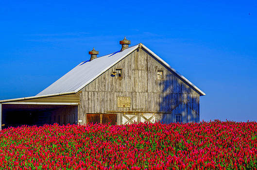 Barn in Red Clover by Denise Darby