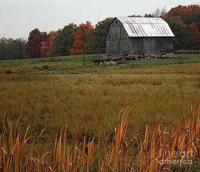 Barn in the Fall by Kathy DesJardins