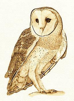 Barn Owl 5 by Cate McCauley