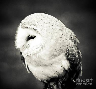 Barn Owl by Alan Oliver
