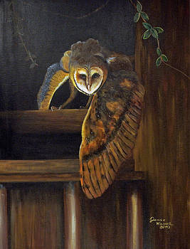Barn Owl by Denise Wagner