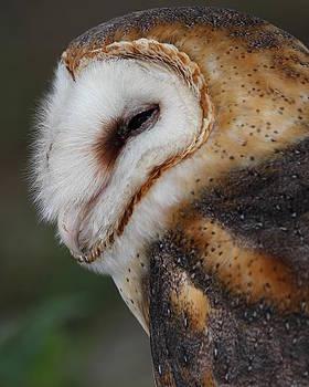 Erin Tucker - Barn Owl