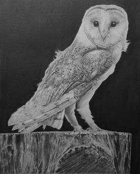 Barn Owl by Mike OConnell