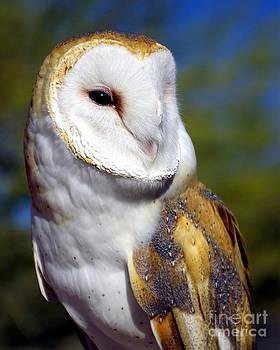 Douglas Taylor - BARN OWL PORTRAIT