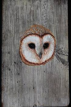 Barn Owl Sculpted on Authentic Barn Wood by Donna Genovese