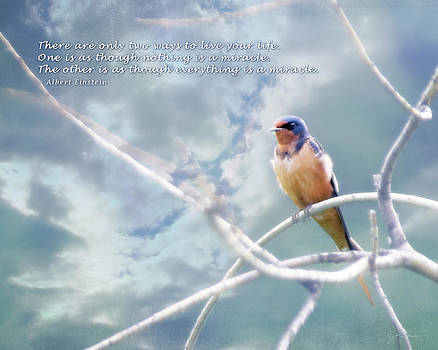 Barn Swallow on Blue Sky with Einstein Quote by Julie Magers Soulen
