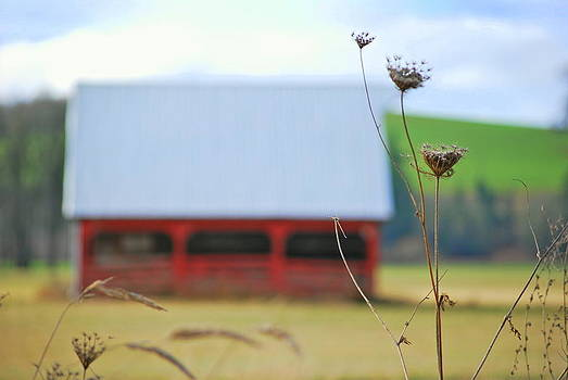 Barn Thistle by Mamie Gunning