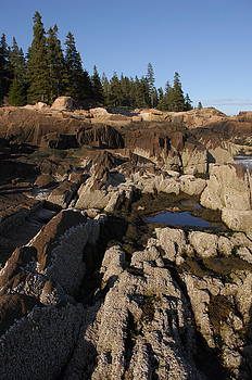 Barnacle rocks in Acadia by Rick Frost