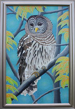 Barred Owl by Amanda  Lynne