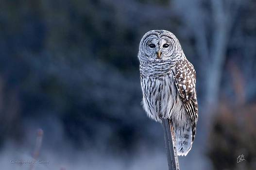 Barred Owl at Presqu'ile by Christopher Grove