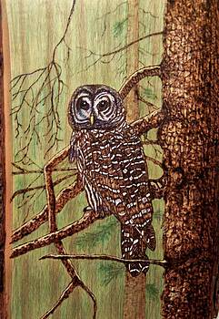 Barred Owl by Danette Smith