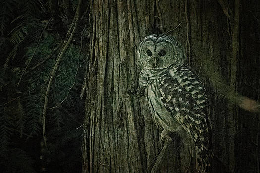 R J Ruppenthal - Barred Owl