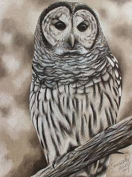 Barred Owl by Samantha Howell