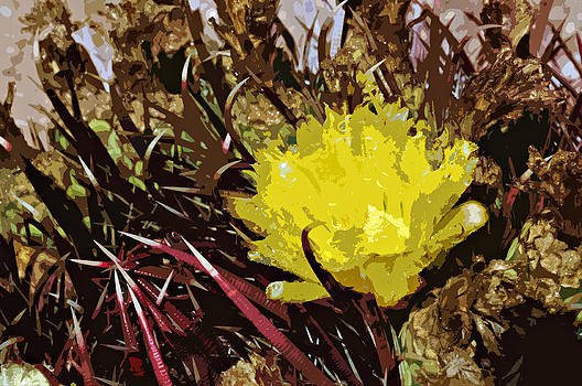 Barrel Cactus Bloom by Jack McAward