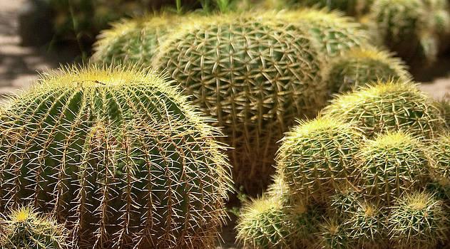 Gilbert Artiaga - Barrel Cactus