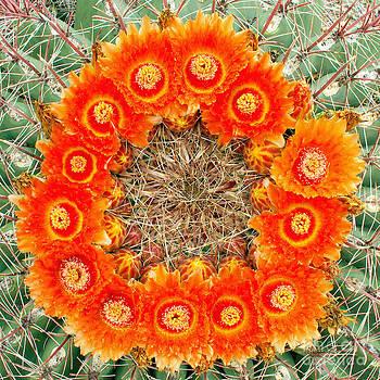 Douglas Taylor - BARREL CACTUS - WREATH OF FLOWERS ll