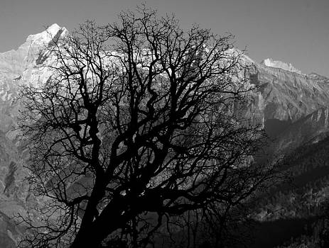 Barren tree in front of Mountain by Amit Rawal