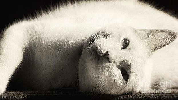 Basking In The Sun by Pam  Holdsworth