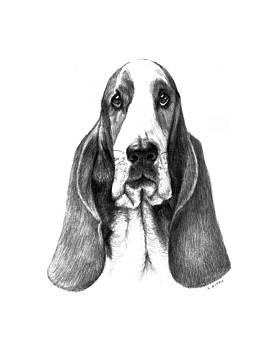 Bassett Hound by Lou Ortiz