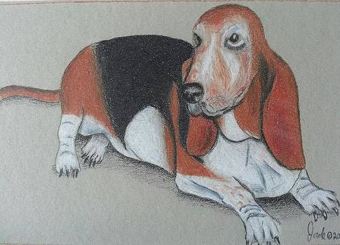 Bassett Puppy by Steve Jorde