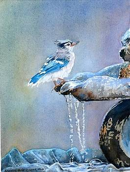 Bathing Baby Blue Jay by Brenda Beck Fisher