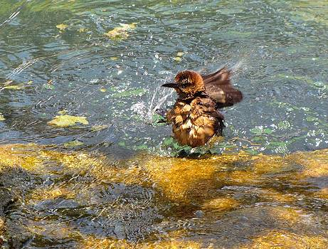 MTBobbins Photography - Bathing Bird