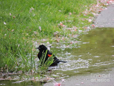 Bathing in a Puddle by Pamela Rivera