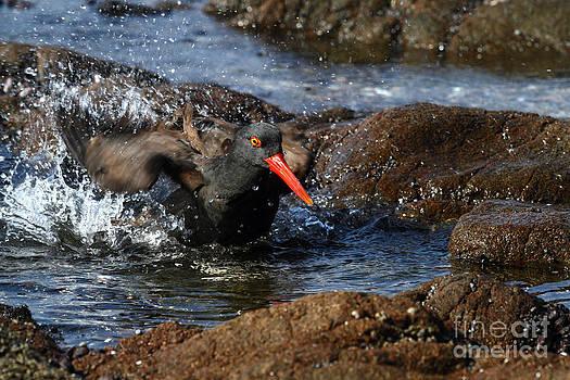 James Brunker - Bathtime Action