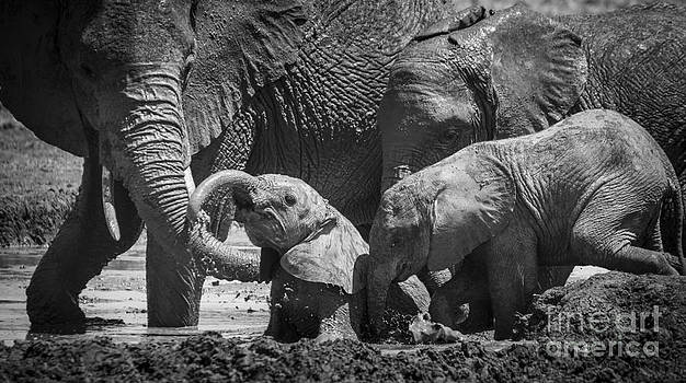 Bathtime for Baby by Howard Kennedy