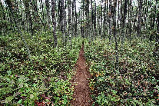 Dawn J Benko - Batona Trail