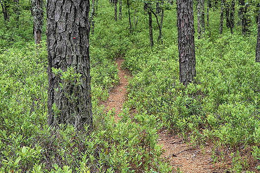 Dawn J Benko - Batona Trail II